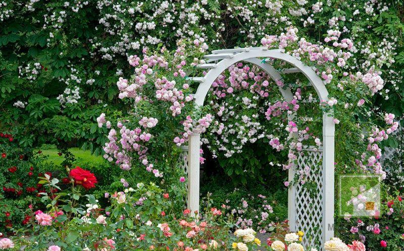 Арки садовые: преимущества, функционал, применяемые материалы, примеры на фото
