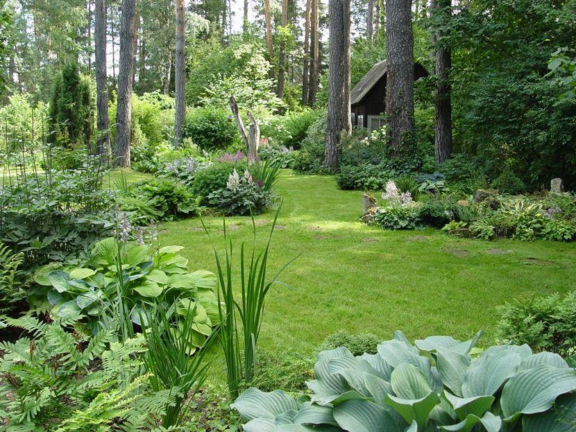 лесной участок создать клумбу