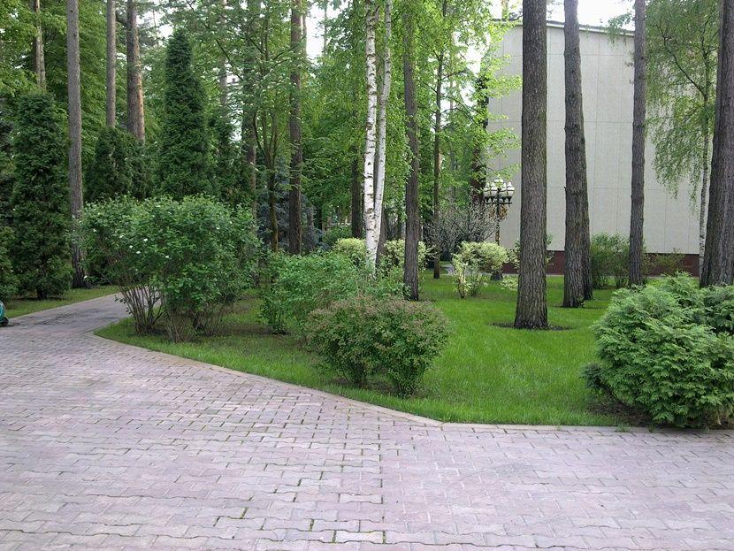 ландшафтный дизайн в лесу