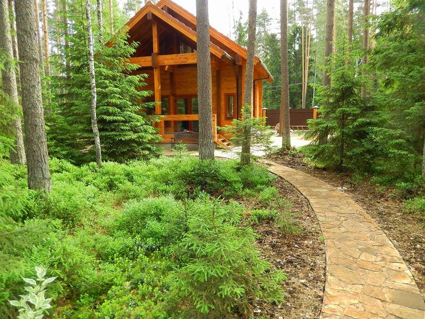 дизайн лесного участка с деревянным домом картинки
