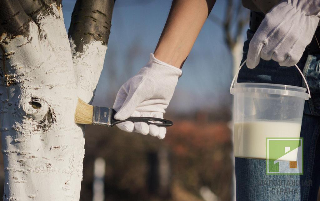 Способы приготовления растворов для побелки деревьев весной