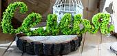 Как стабилизировать мох в домашних условиях, разновидности природного материала, способы его сохранения в естественном виде - 11 фото8