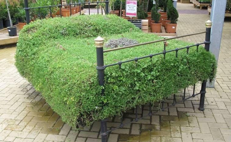 сад и огород чебоксары