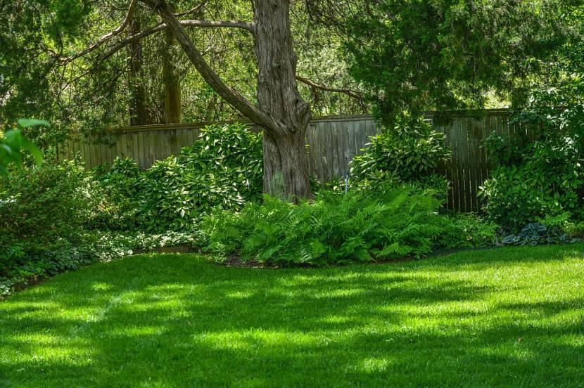 тенелюбивый газон