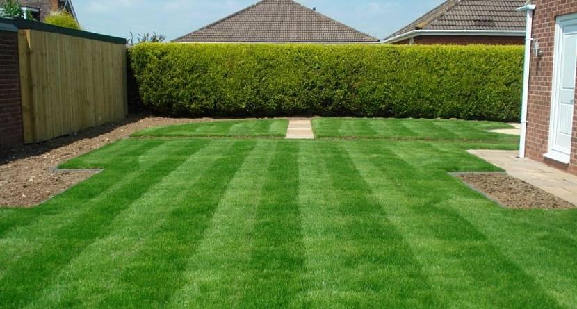 газон для дачи