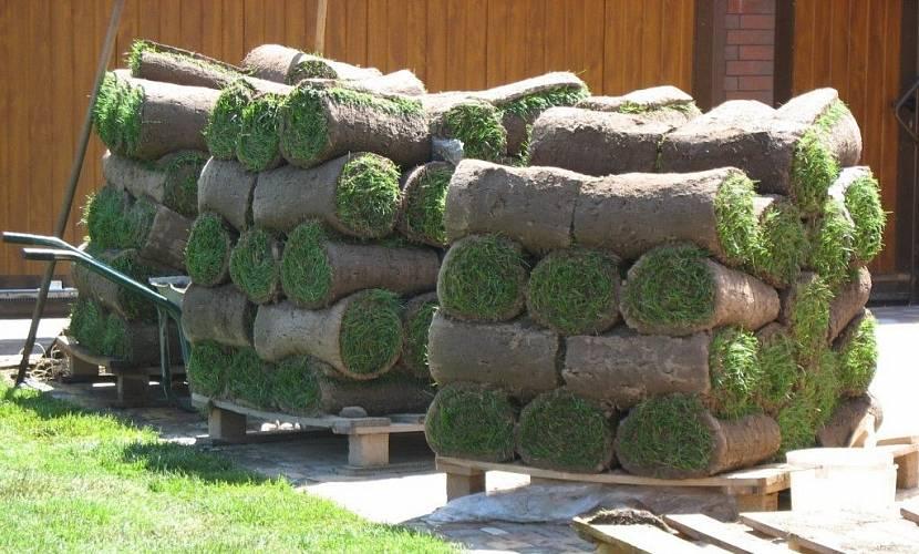 Рулонный газон уже через 2 недели готов радовать своих владельцев
