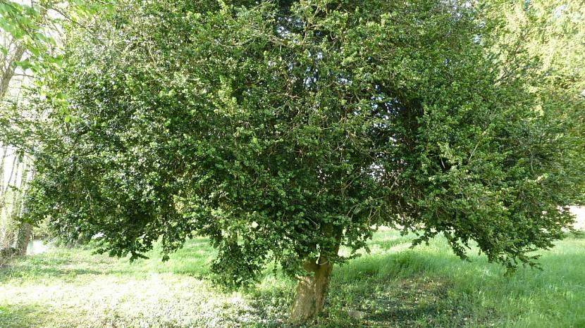 деревья для ландшафтного дизайна