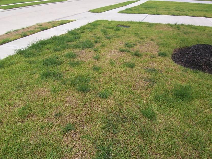 разровнять старый участок газона под газон