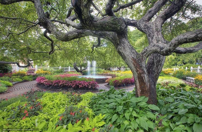 деревья на плане в ландшафтном дизайне