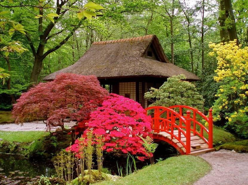 сад в японском стиле на даче