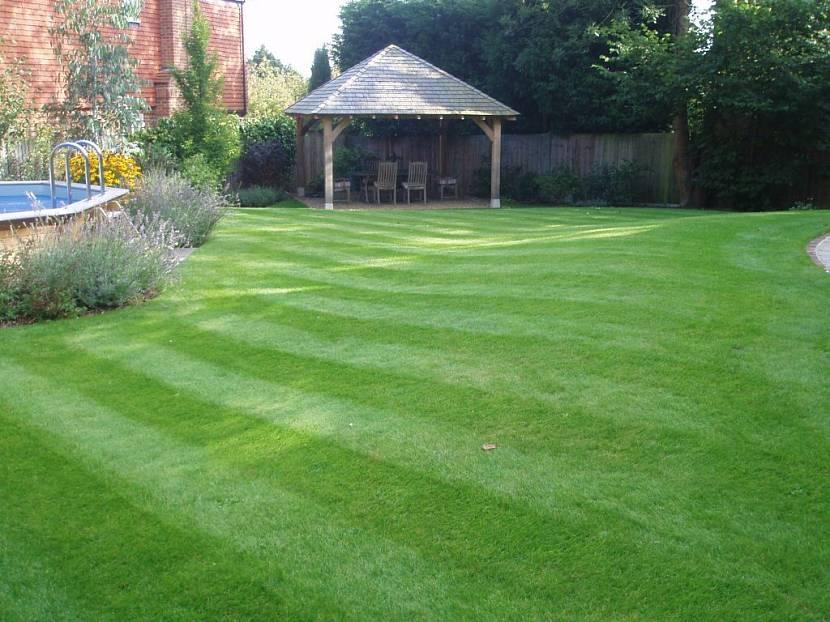 спортивная трава для газона цена