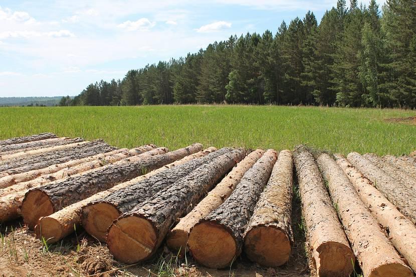 Обработка древесного продукта