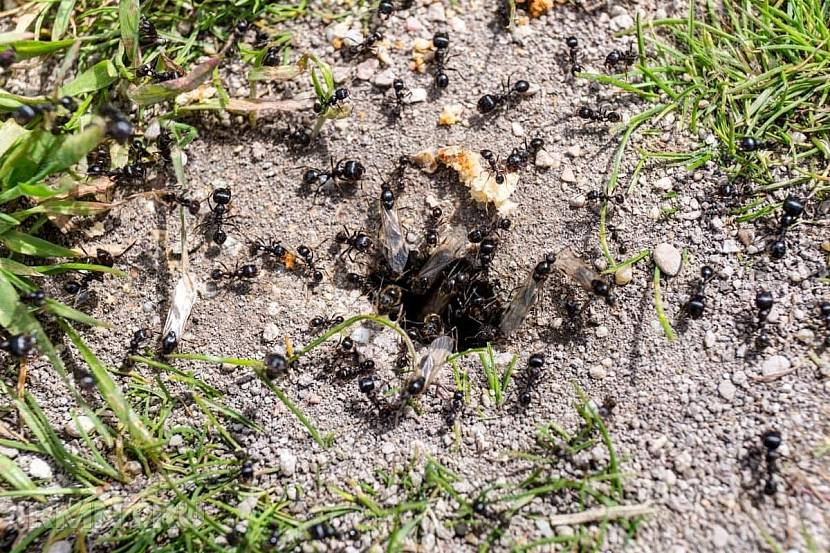 Муравьиное гнездо