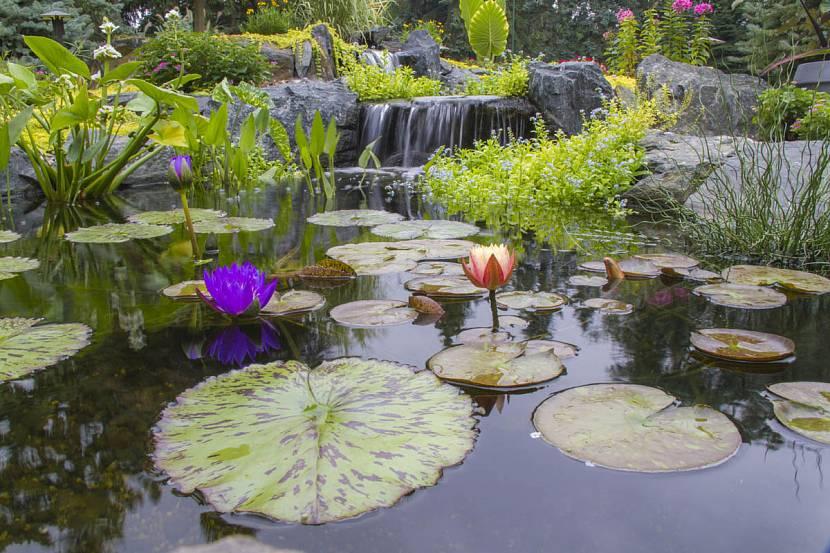 Подбор растений для пруда