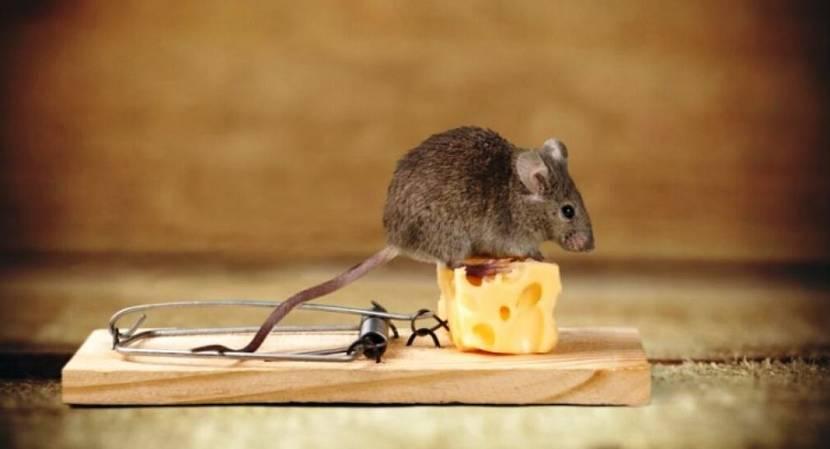 Ловушка для мышей