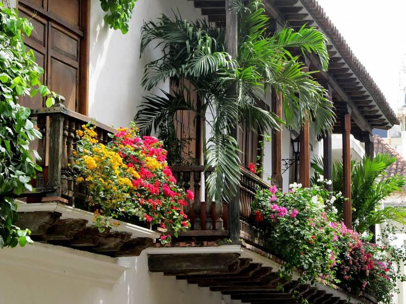 Варианты растений для балкона
