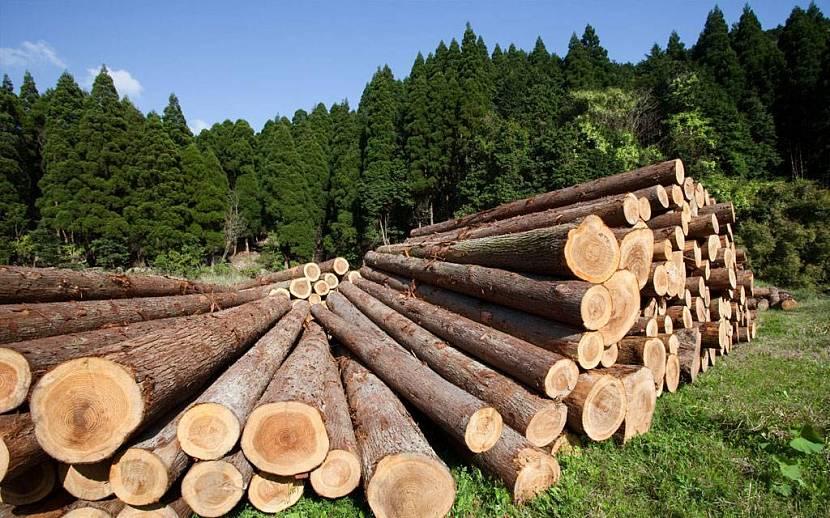 Деревянное домостроение обзор