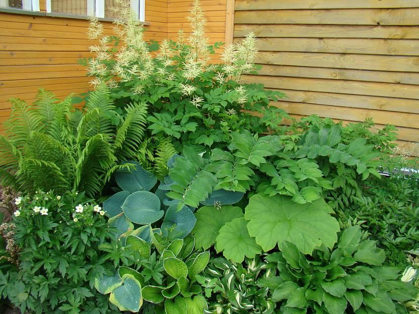Тенелюбивые растения для клумб