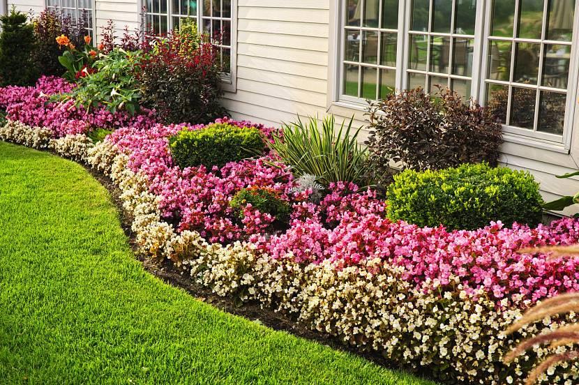 Красивые сорта многолетников возле дома