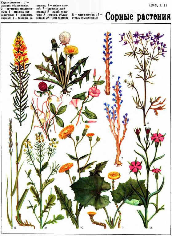 Сорные растения