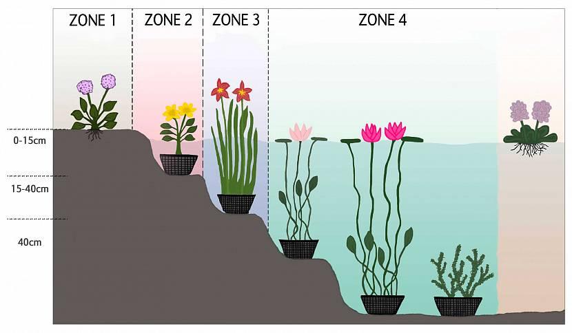 Зональная высадка растений