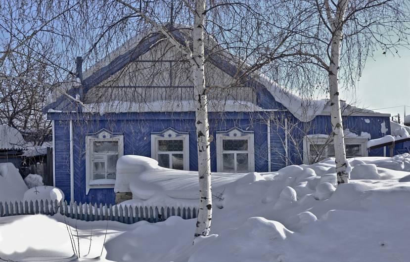 Береза зимой на участке