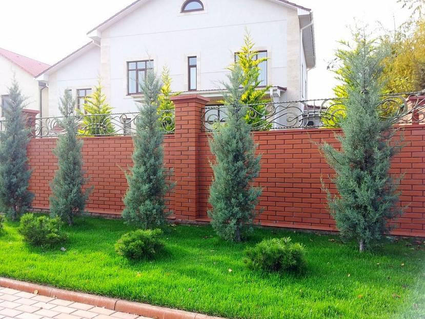 Хвойные растения в озеленении