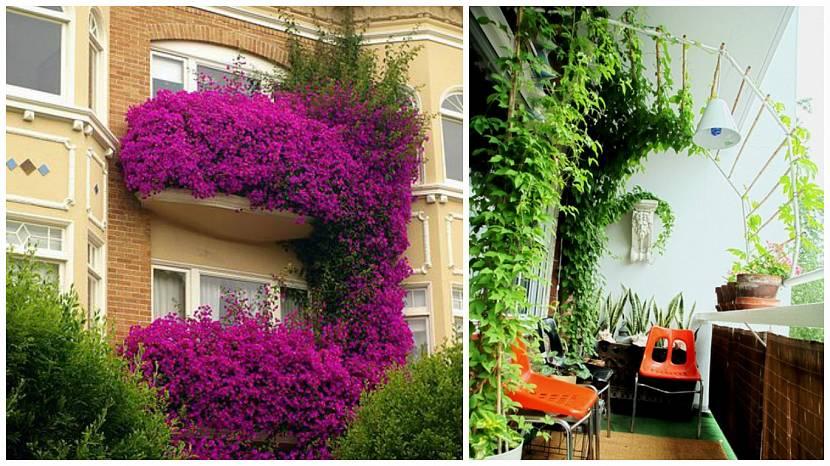 Вертикальное озеленение стеной