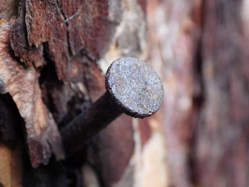 Забитый гвоздь в дереве