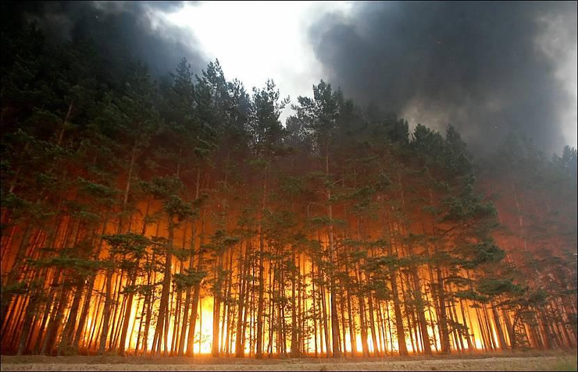 Синергия лесной промышленности и большой стройки