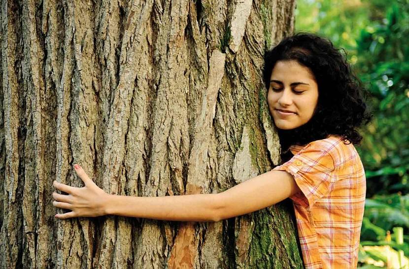 Деревья доноры отдают энергию