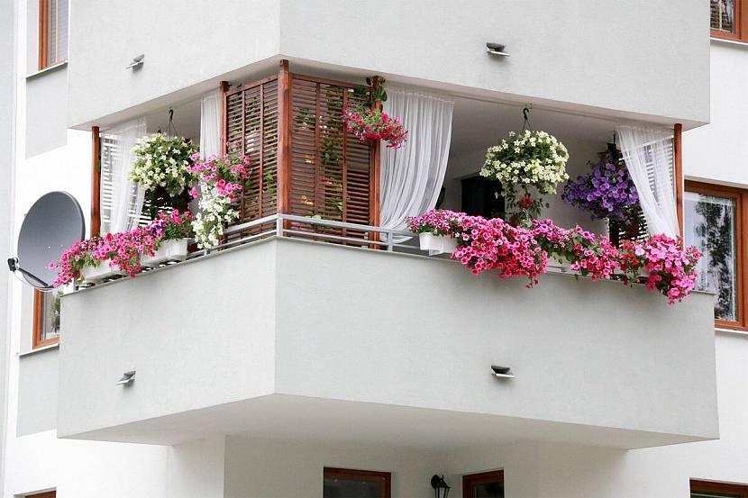 Красивые растения на лоджии