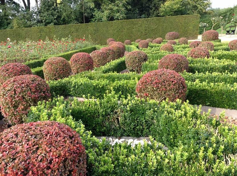 Комбинация самшитового кустарника с разными растениями