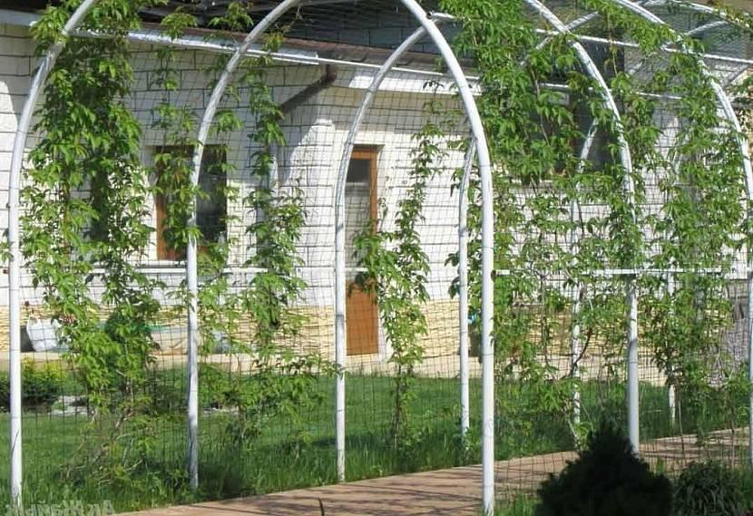 Арочная шпалера во дворе загородного дома