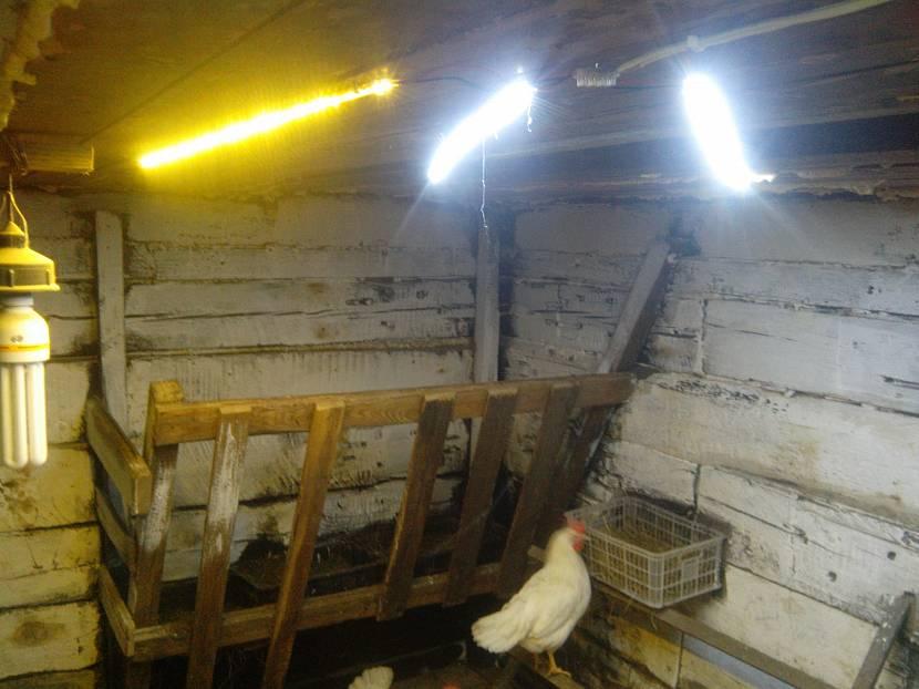 Лампы и курица