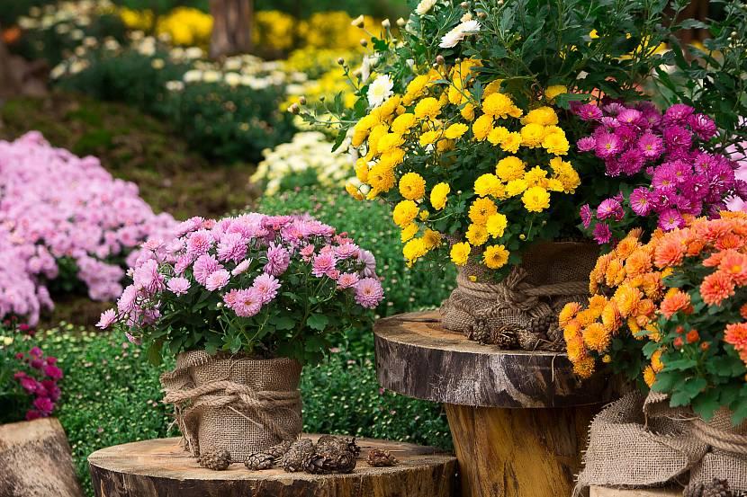 Яркие красивые растения для дачи