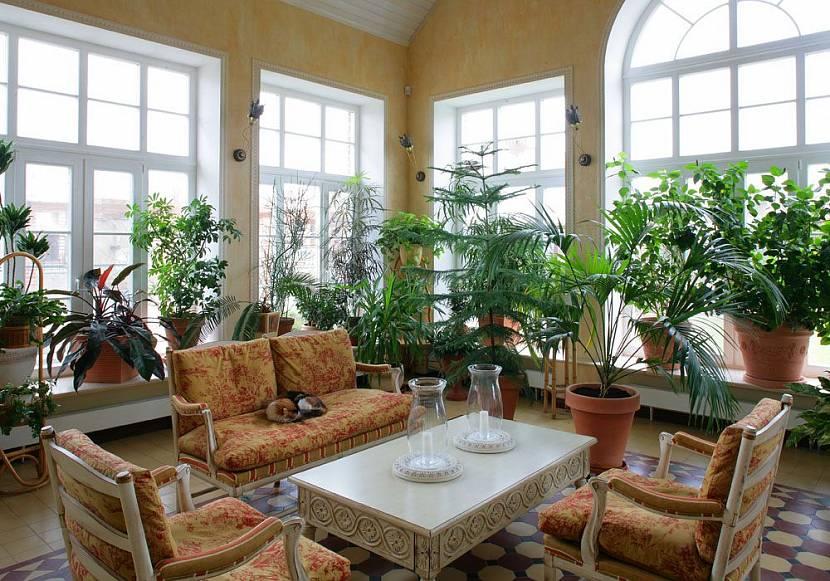 Можно обустроить небольшой зимний сад в имеющейся комнате