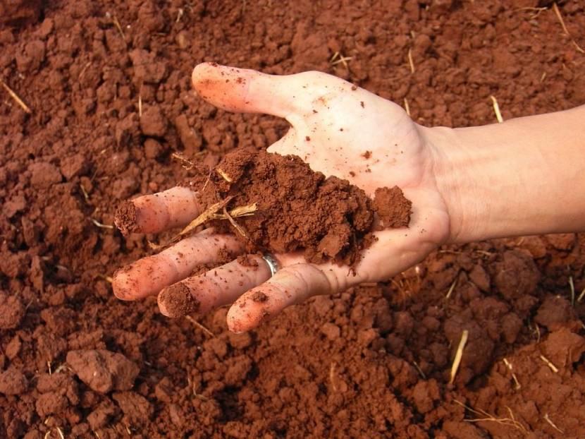 Результаты исследований почвы