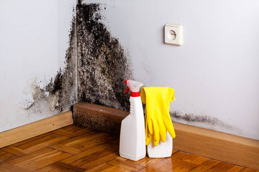 Грибок на стенах должен быть уничтожен