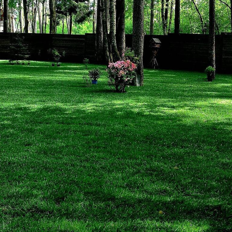 толщина рулонного газона