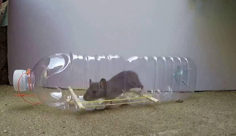 Пойманная мышь