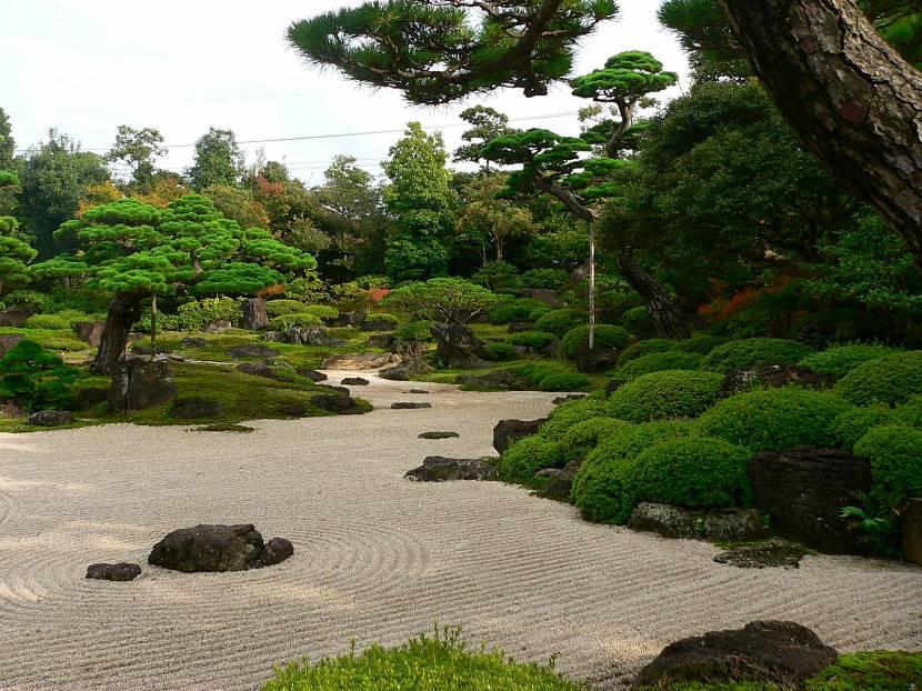 Камни и растительность