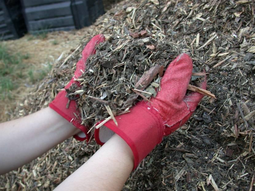 Укрытие самшитовых кустов на зиму