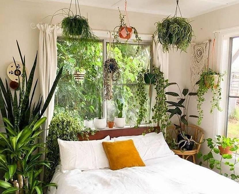 постоянно выставляю фото растений в спальне поклонникам российского