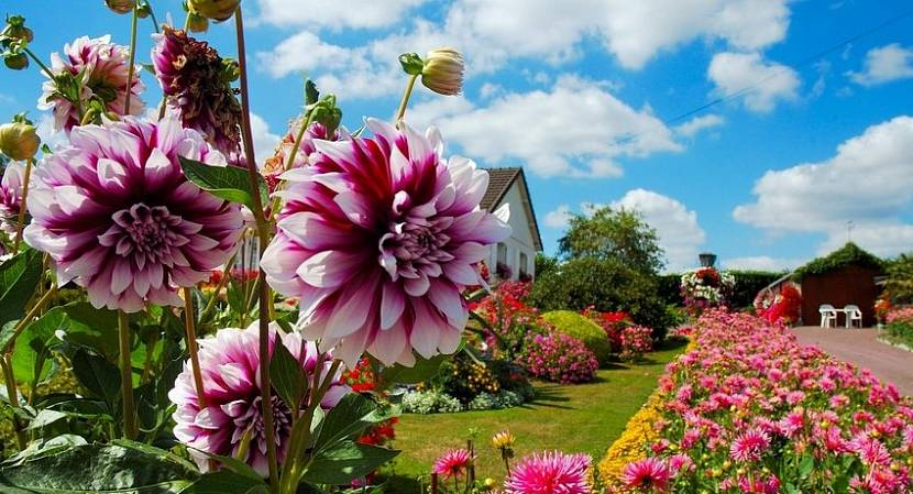 Цветы для дачного сада