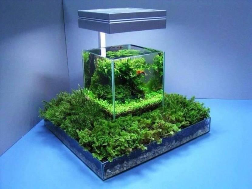 Оригинальная подставка под мини-аквариум