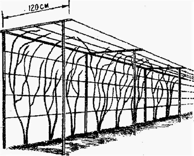 Вариант конструкции П-образной шпалеры для винограда