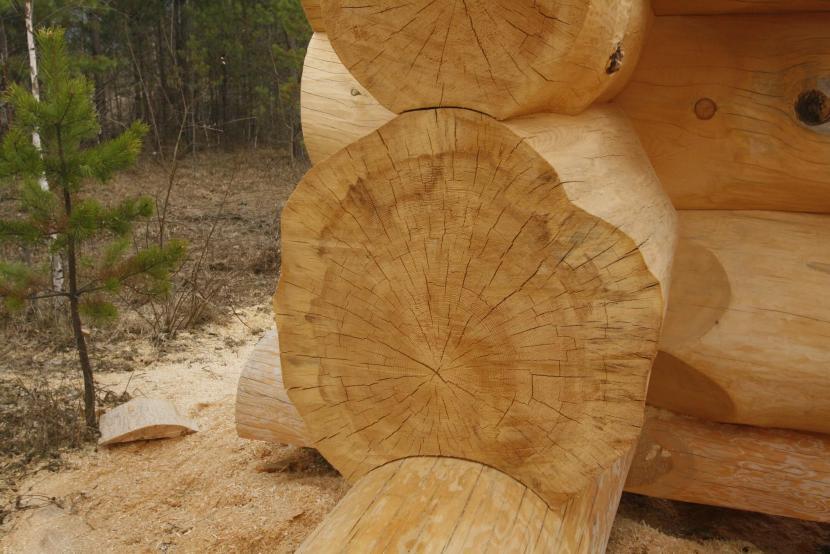 Деревянные дома бьют рекорды