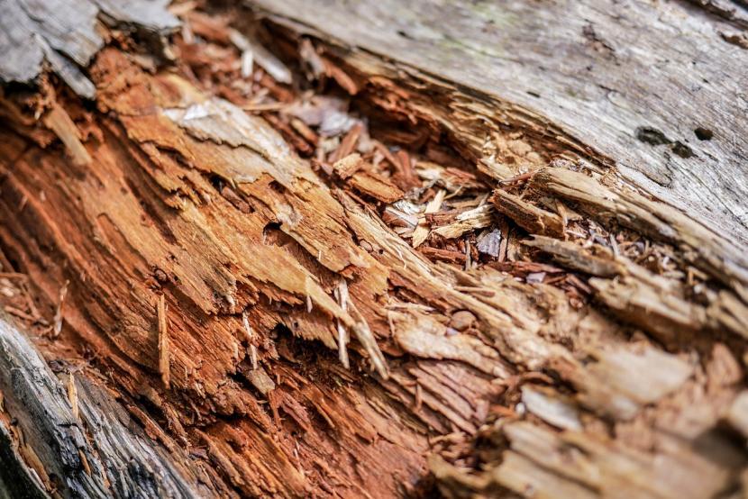 Разрушение древесины от частого контакта с водой