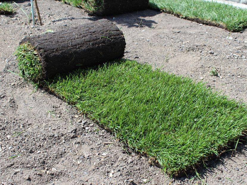 вес рулонного газона
